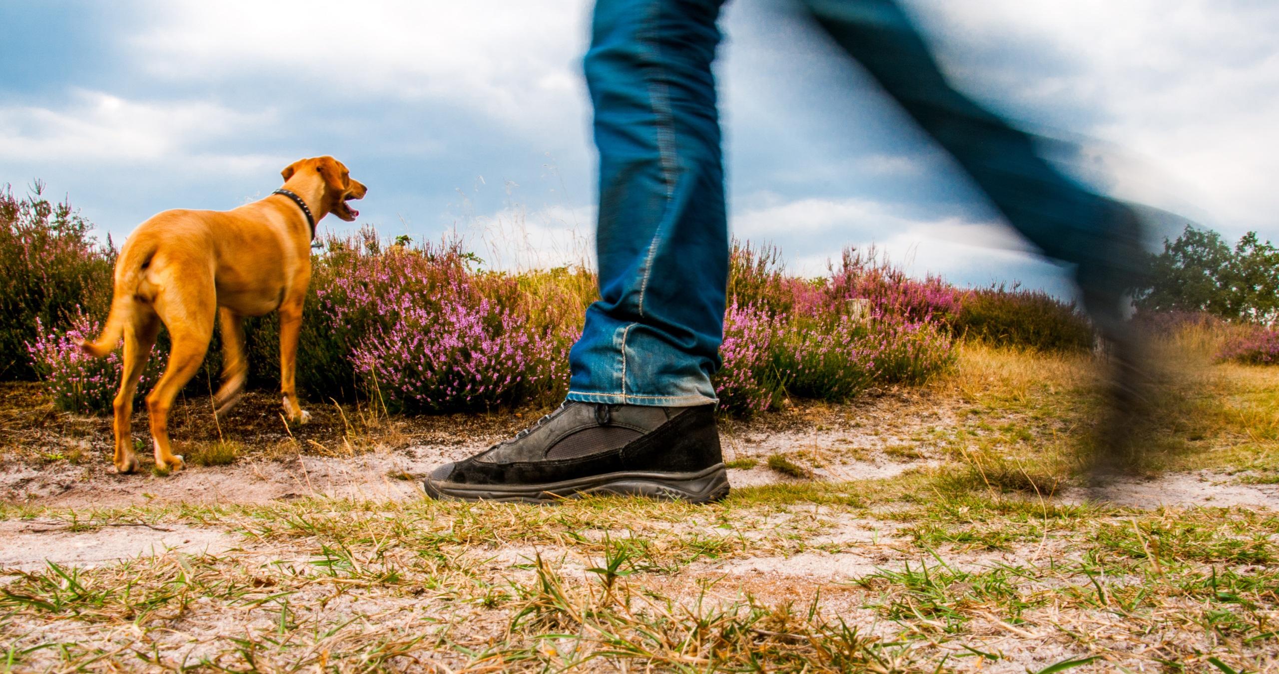 Ontwikkelen wandelnetwerk Mook en Middelaar